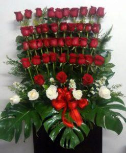 48 Rosas - Flores, Florería, Floristería