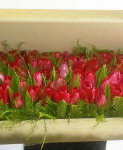 100 Tulipanes en Caja - Flores, Florería, Floristería