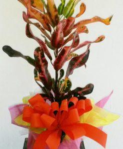 Planta Decorada - Flores, Florería, Floristería