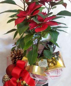 Nochebuena con Chocolates y Vino - Flores, Florería, Floristería